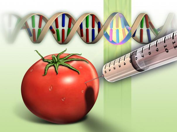 GMO DEBATES IN RUSSIA