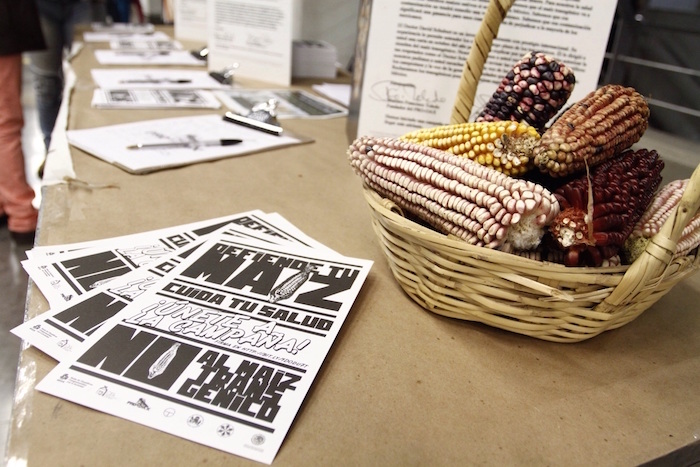 NGO wins battle against Monsanto in Mexico: planting of transgenic maize partially suspended