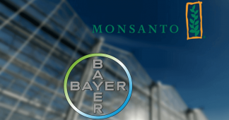 Trying to become owners of Life – Bayer/Monsanto's marriage in hell
