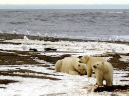 Manhattan Project-sized effort is needed to create artificial Arctic ice