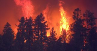 Intensified Forest Fires: The New Western Travesty