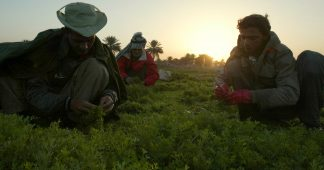 Henry Kissinger's Food Occupation Of Iraq Continues To Destroy The Fertile Crescent