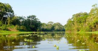 Tropical Trump Declares War on Amazonia