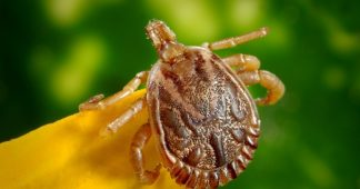 Congress investigating possible secret 'bioweaponization' of insects by the Pentagon