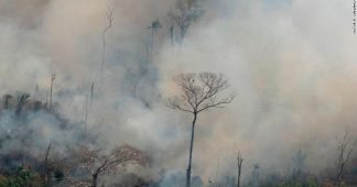 We are facing a global emergency in the Amazon. Here's what we can do