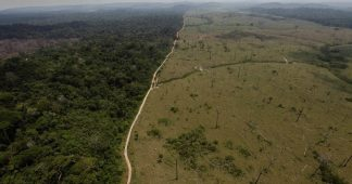 Exterminating the Future: World Outcry Grows as Brazil Rapidly Expands Deforestation of Amazon