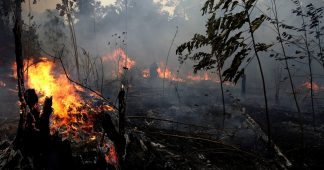 Amazon Forest in danger of Collapse