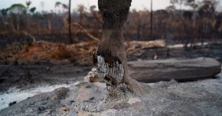 Amazon wildfires set to cause irreversible damage