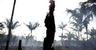 L'Amazonie brûle, Bolsonaro en pompier-pyromane