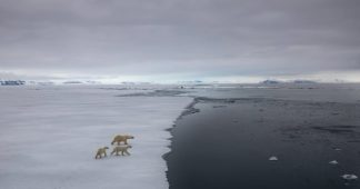 Domino-effect of climate events could move Earth into a 'hothouse' state