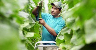 L'UE exhorte les pays à ouvrir leurs frontières aux travailleurs agricoles saisonniers