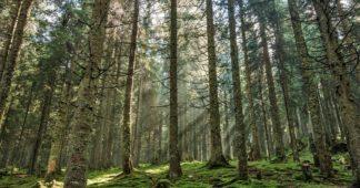 Un crime écologique sans précédent en Europe: les forêts roumaines